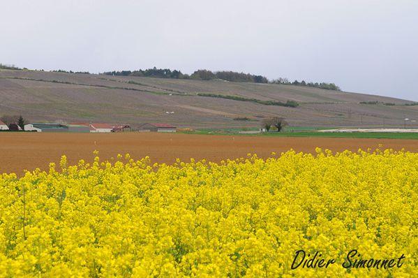 Vallée de la Marne à la fauteur de BONNEIL ( Aisne )