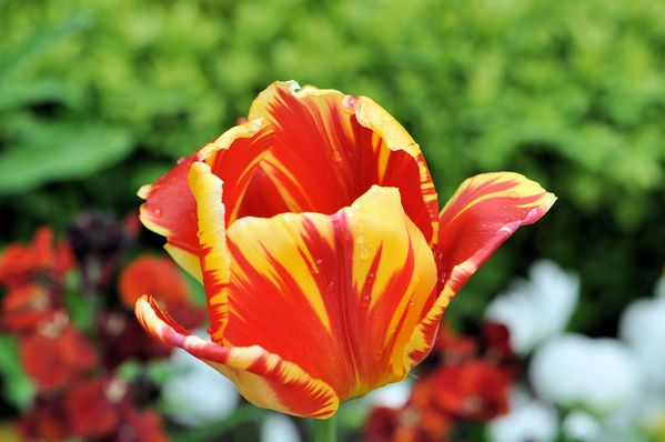 plantes-et-fleurs 0044