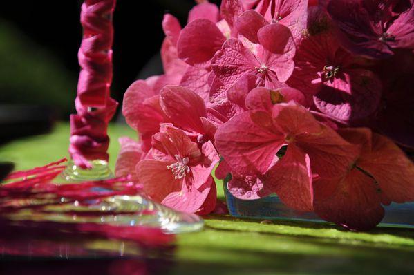 hortensias-au-jardin 0044