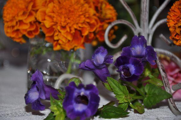 tutti-fleuri 0105