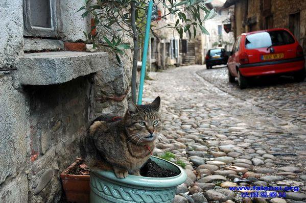F古城小猫
