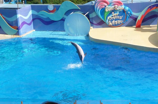 Attractions (11)