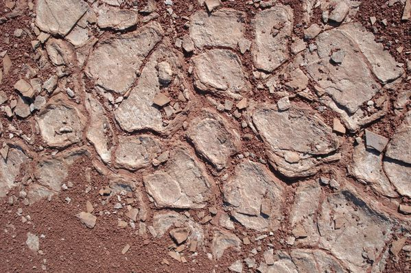 Fentes de dessication ou de retrait (mud-cracks) à la surface d'un niveau argileux