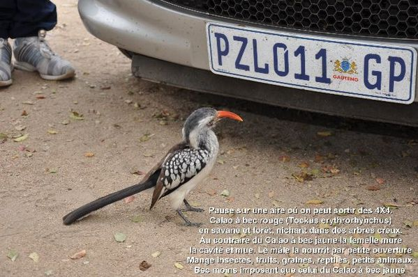 Afrique-du-Sud-5103-redim640.JPG