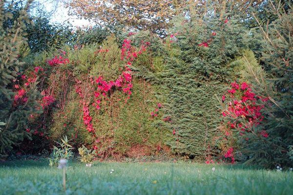 Nature-et-jardin-15 1593