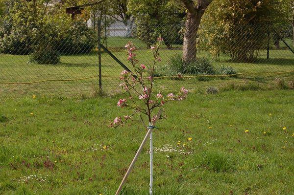 Nature-et-jardin-17 2925
