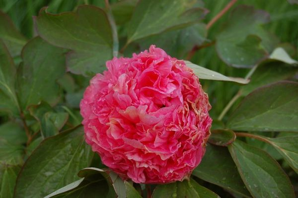 Nature-et-jardin-18 3095