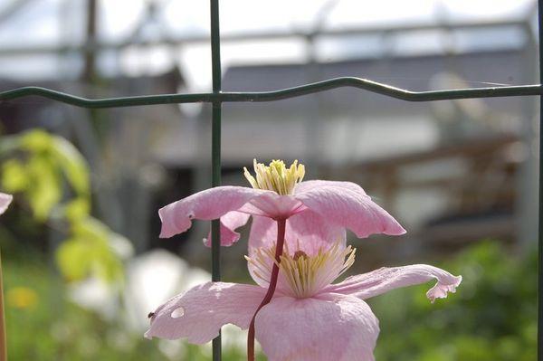 Nature-et-jardin-18 3180