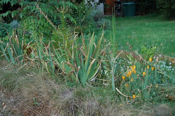 Nature-et-jardin-20-0652.JPG