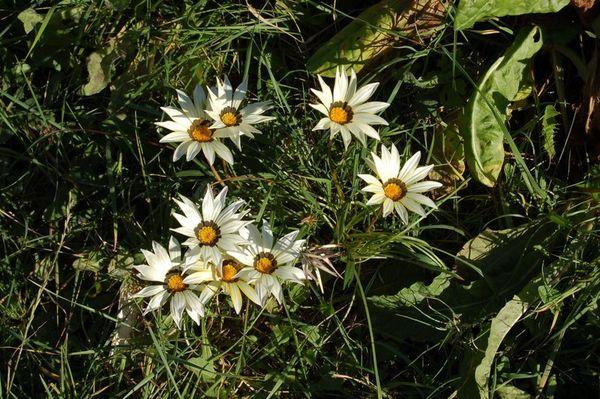 Nature-et-jardin-20-0686.JPG