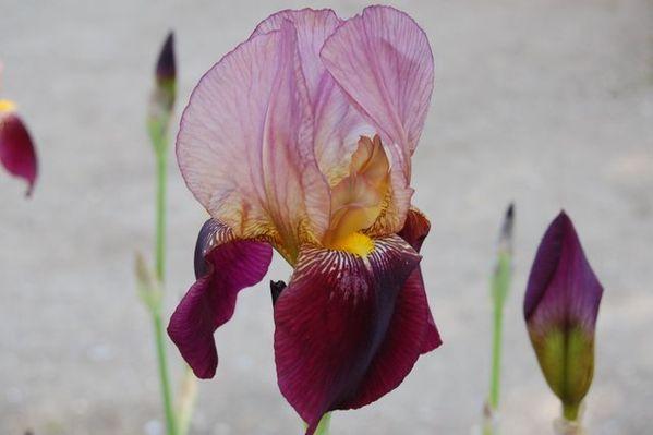 Nature-et-jardin-24 0336