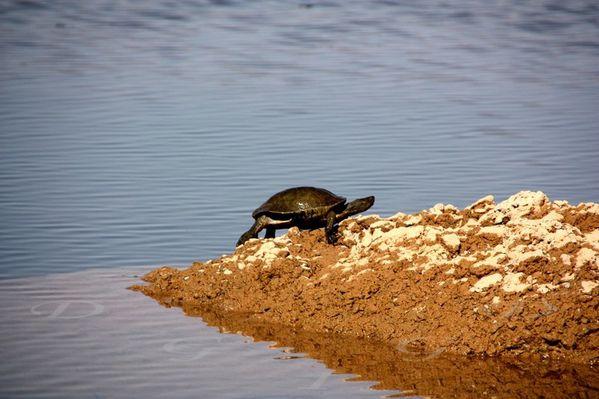 tortues-Bivouac-vers-Ouarzazate-037.jpg