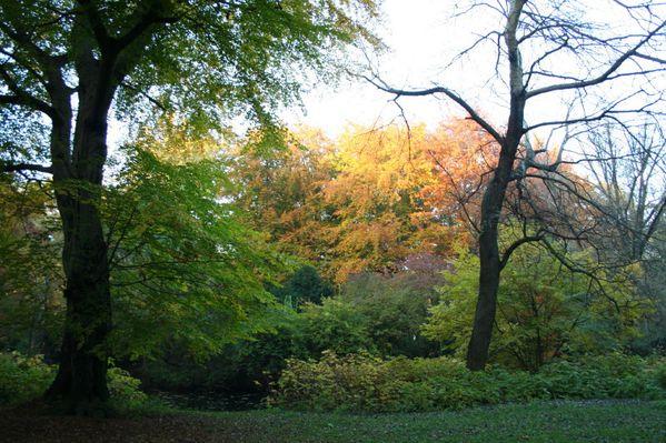 automne-11-8091.JPG