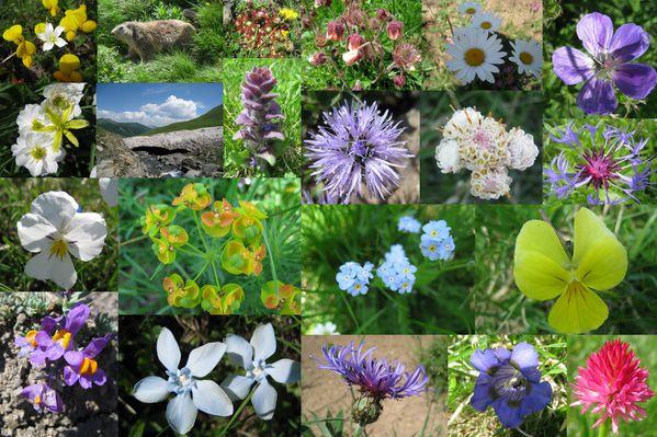 fleurs juillet