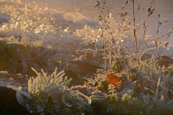 Givre-neige-6-2830_modifie-2.jpg