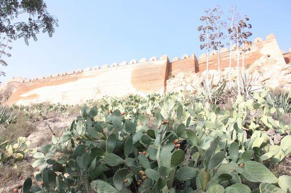 Plantes-3761-L-Alcazaba-jpg