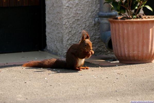 L'écureuil (6)