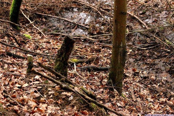 Mues de cerfs 1 mars 2014 (6)