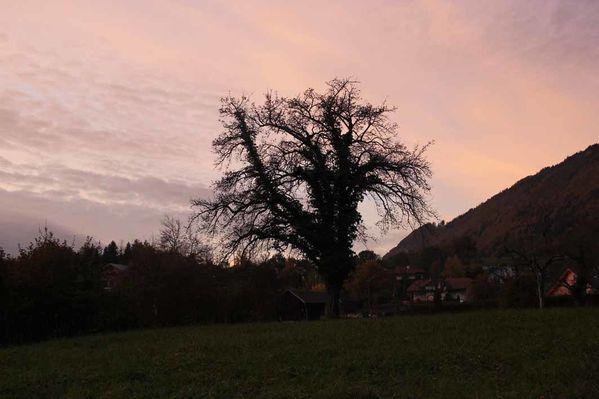 automne-rose.jpg