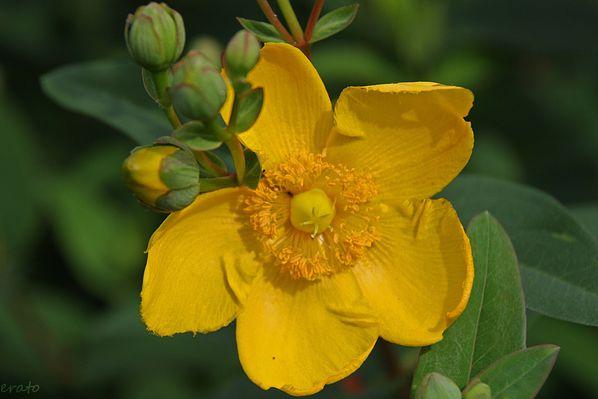 fleurs-004a.jpg