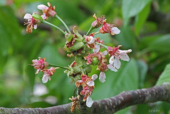 fleurs-013_New1.JPG