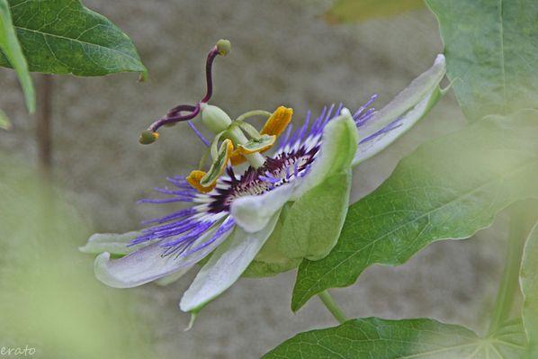 fleurs-029a.jpg