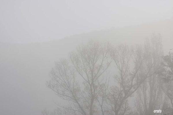 brouillard-toiles-araignees-034.jpg