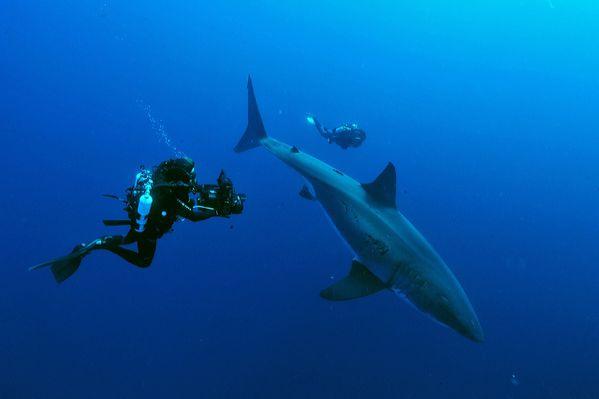 requins 2623