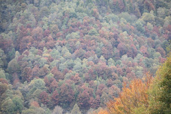 2010.10.23-Camorino-Ponte-Capriasca 7838