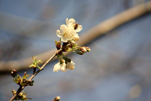 2011.04.03-Strada-Bassa-Leventina-parte-2 9382