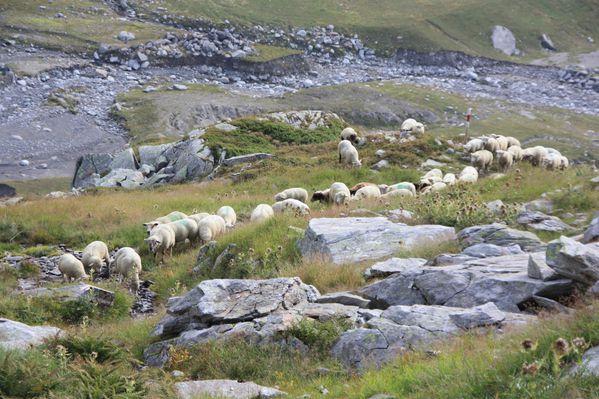 2011.09.03-Sentiero-degli-stambecchi 1765