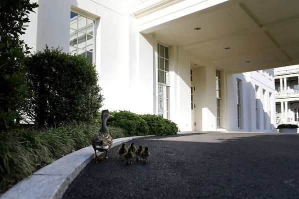 sem13mail-Z16-L-autre-famille-presidentielle-Maison-Blanche.jpg