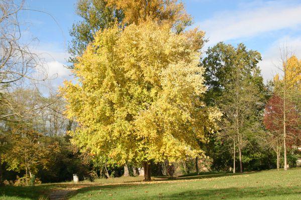 2012_novembre-montesquieu-021.jpg