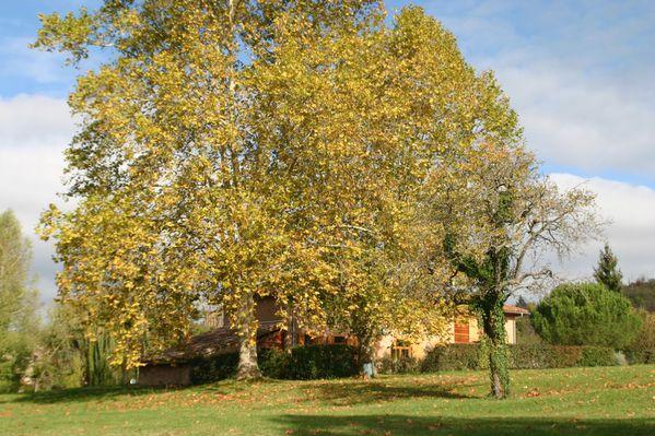 2012_novembre-montesquieu-022.jpg