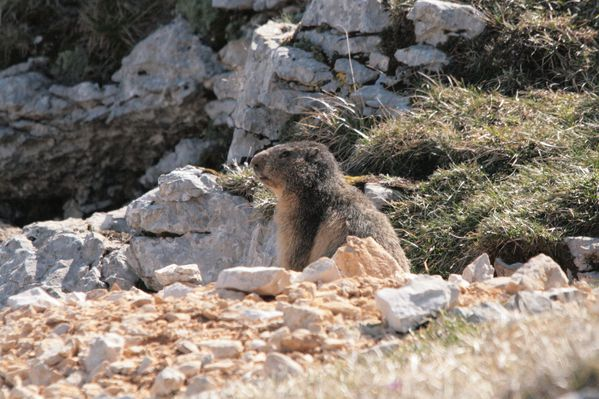 110416 Marmottes 040