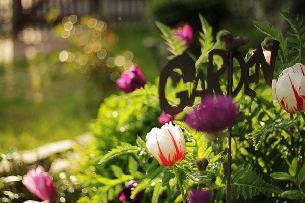 Garten3-7987.jpg