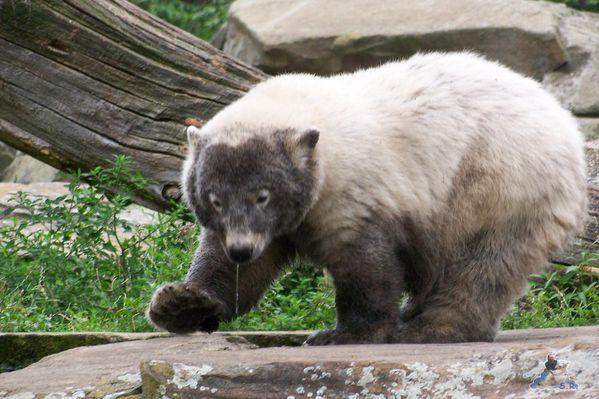 Knut 2007 07 19