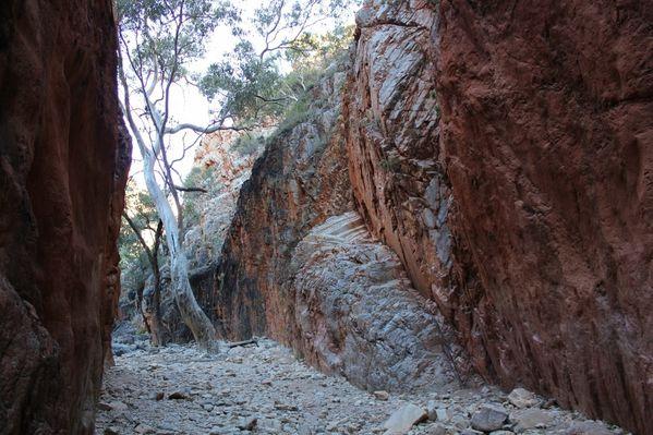 Aussie-oie-MAI-2012-9003--800x533--BIS.jpg