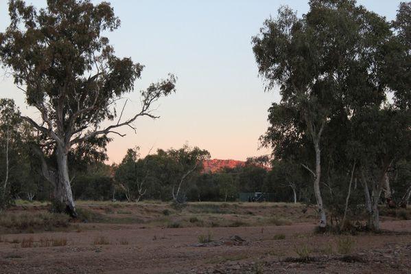 Aussie-oie-MAI-2012 9205 (800x533)