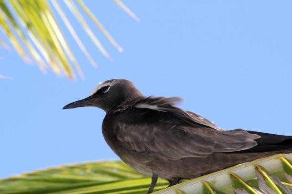 Polynesie-2011-2 7330 (800x533)