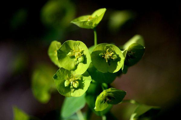 Flores--Faunes-Nature.-6702.JPG