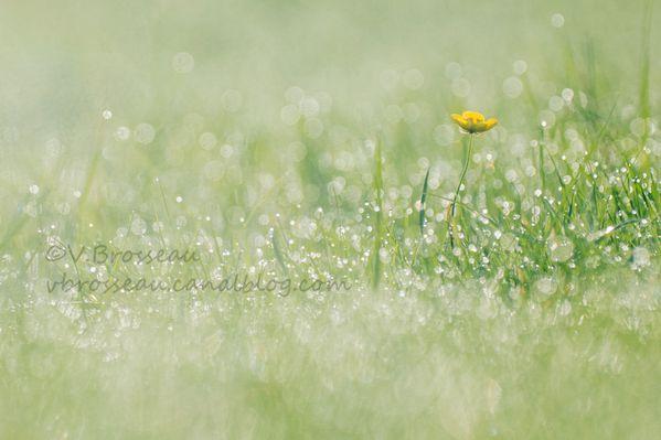 prairie13-1.jpg