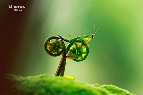 InsecteVelo
