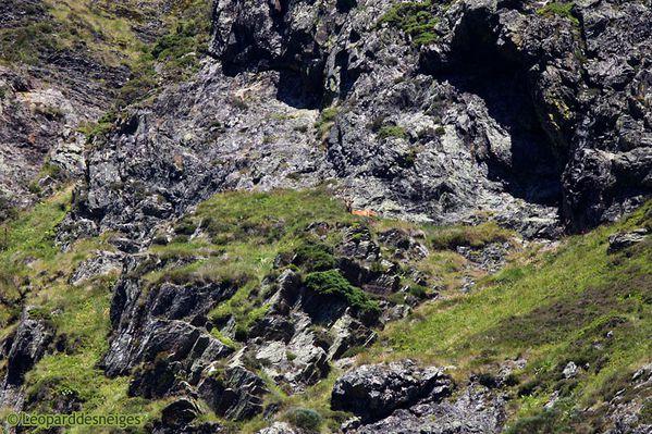b11-29-11-09 Melles 065 Deux Cerfs