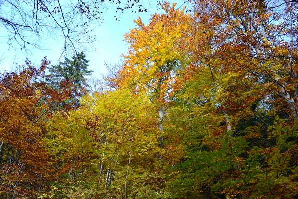 2012-10-21-chartreuse-seuil-delaup 0804