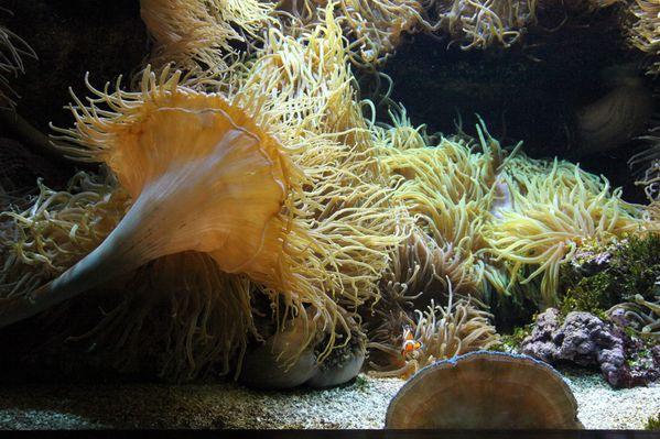 poissons-oceanopolis 1347c