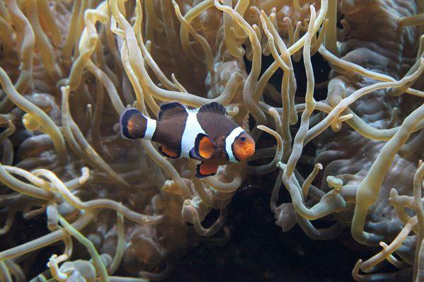 poissons-oceanopolis 1356c