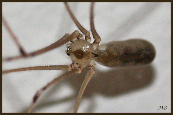 Arachnides-02-8265a.jpg