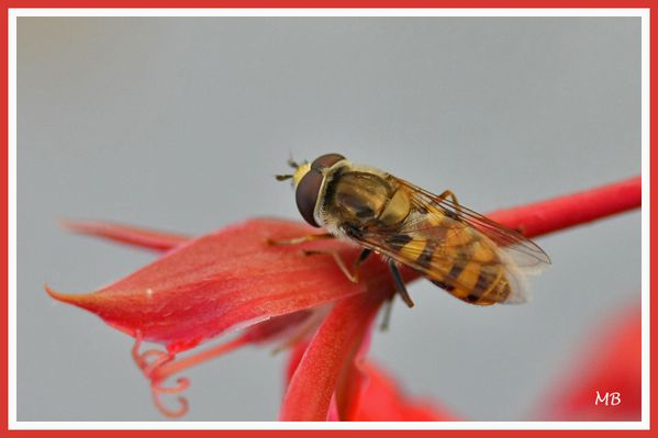 Insectes 01 4913