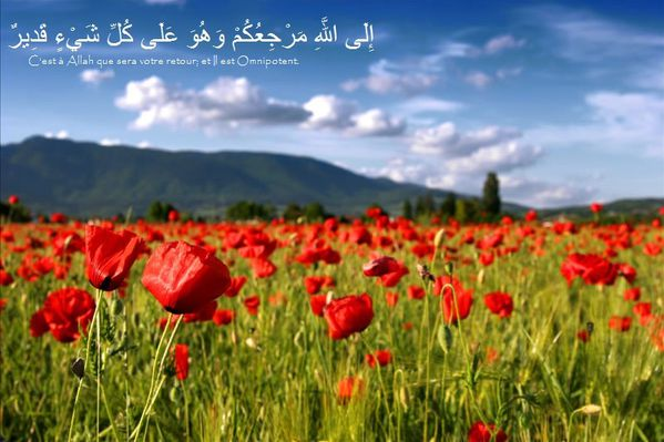Fond écran islam coran (56)